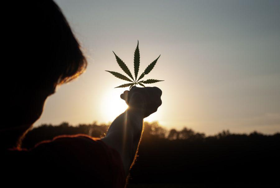 man holding hemp leaf in front of a sunrise